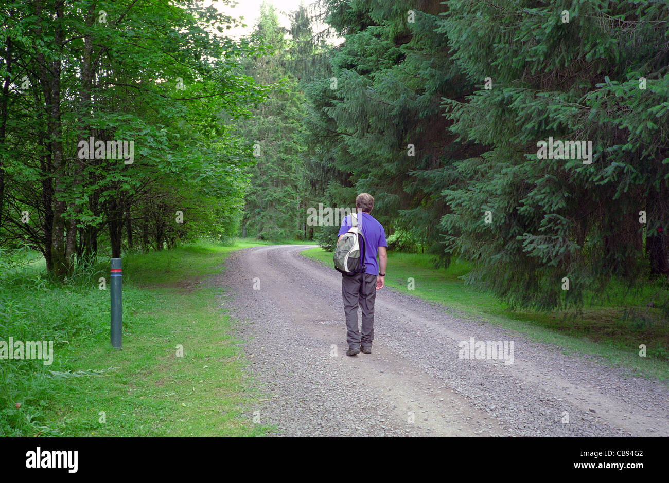 Caucasain Adult Male Walker Walking Through the Forest of Ae, Dumfries & Galloway, Scotland, UK MODEL RELEASED - Stock Image