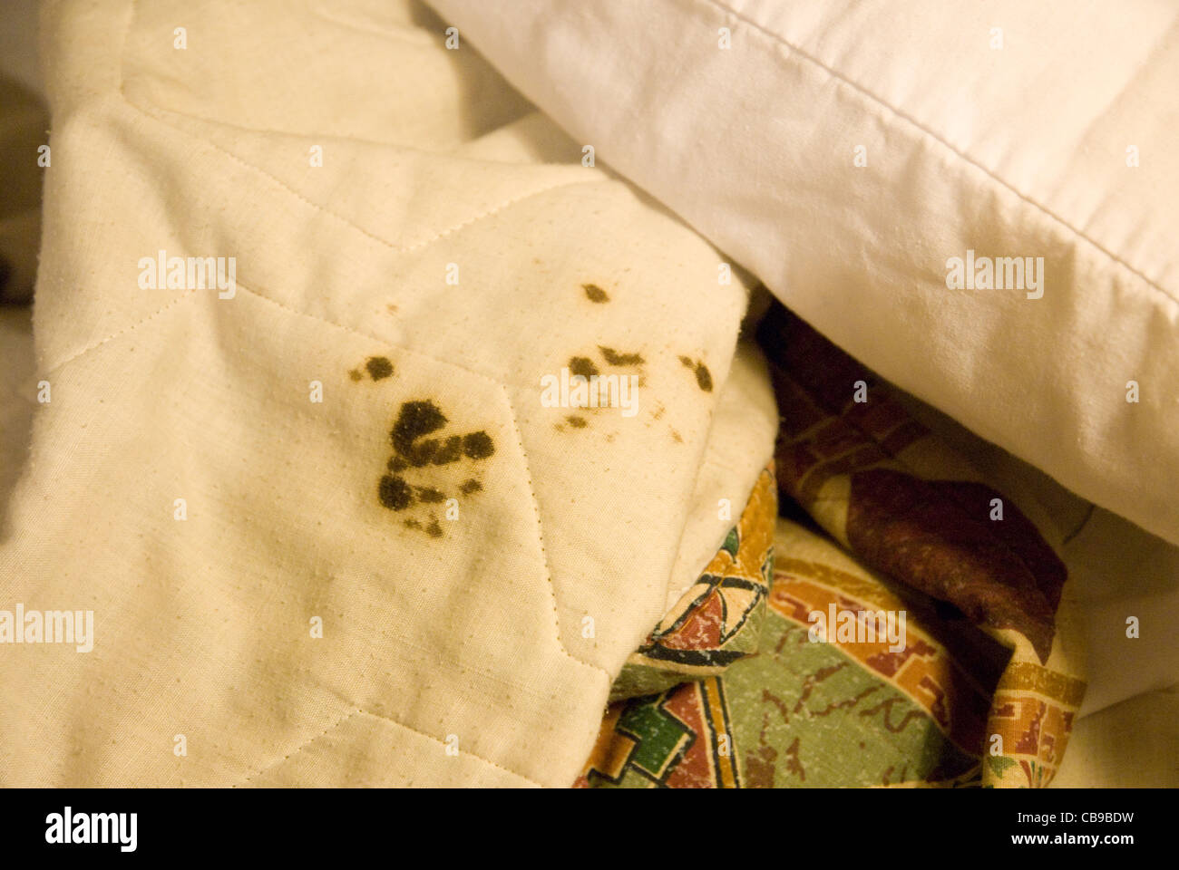 The problem of cleanliness in hotel rooms is evidenced by dried blood stains on the comforter in a Texas motel room - Stock Image