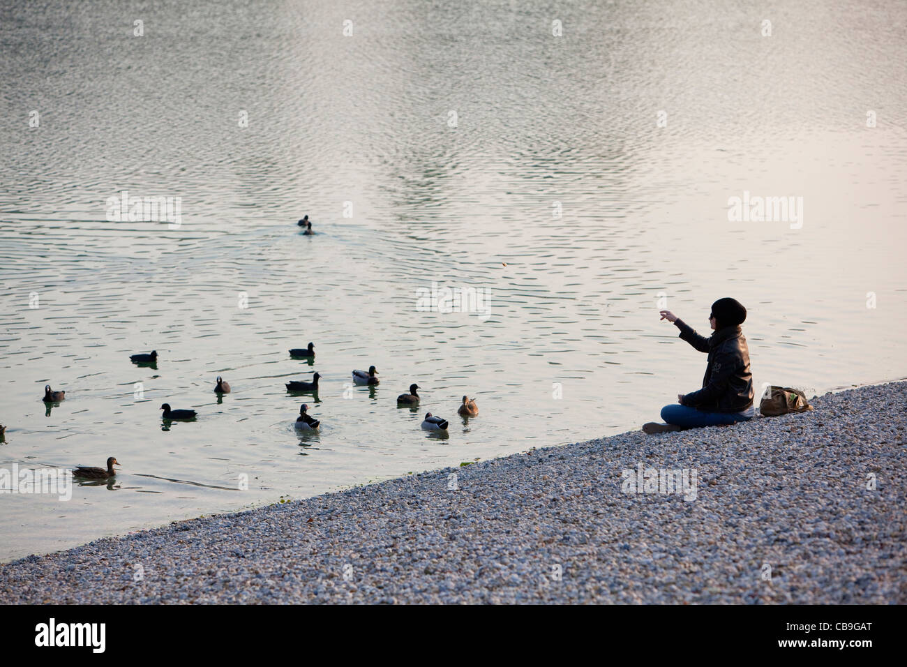 A girl is feeding ducks in park sitting on pebbles near lake. - Stock Image