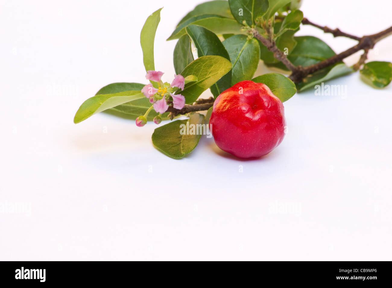Acerola berries (Malpighia glabra)  on white background - Stock Image