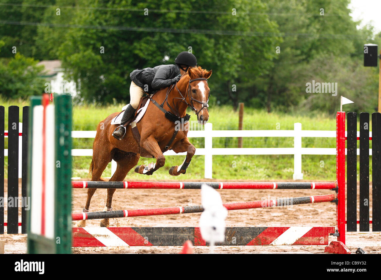Chestnut Horse Jumping Red Fence Stock Photo Alamy