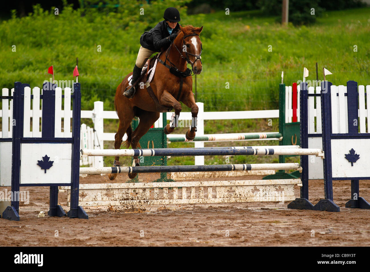 Chestnut Horse Jumping Fence Stock Photo Alamy