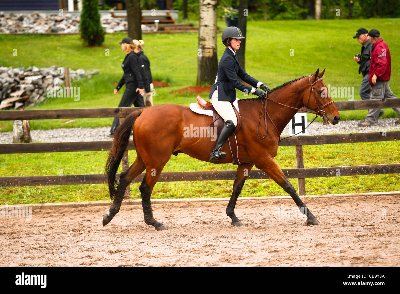 Bay horse cantering - Stock Image