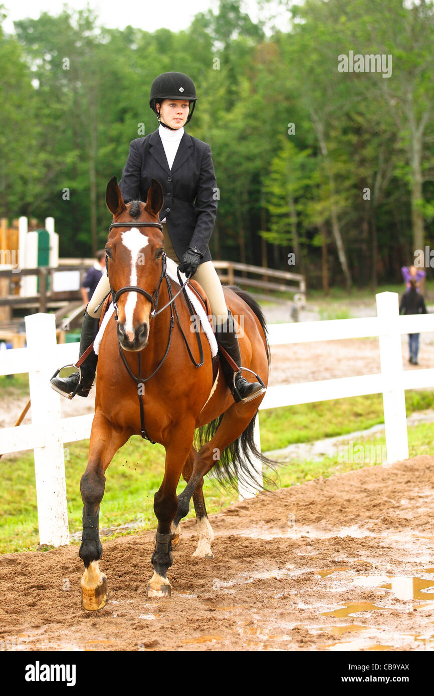 Bay horse in warm up at horse show - Stock Image