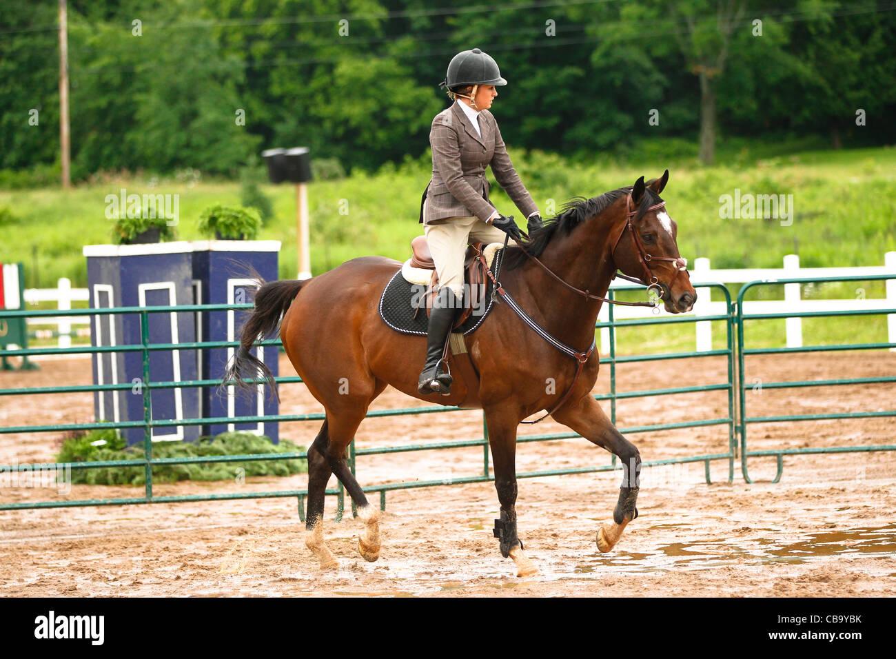 Bay horse trotting - Stock Image