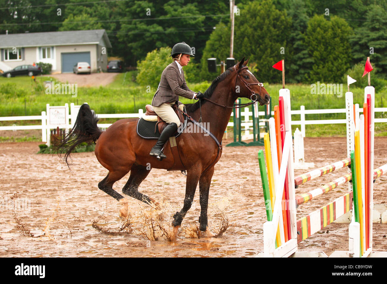 Bay horse at take off to jump fence on rainy day - Stock Image