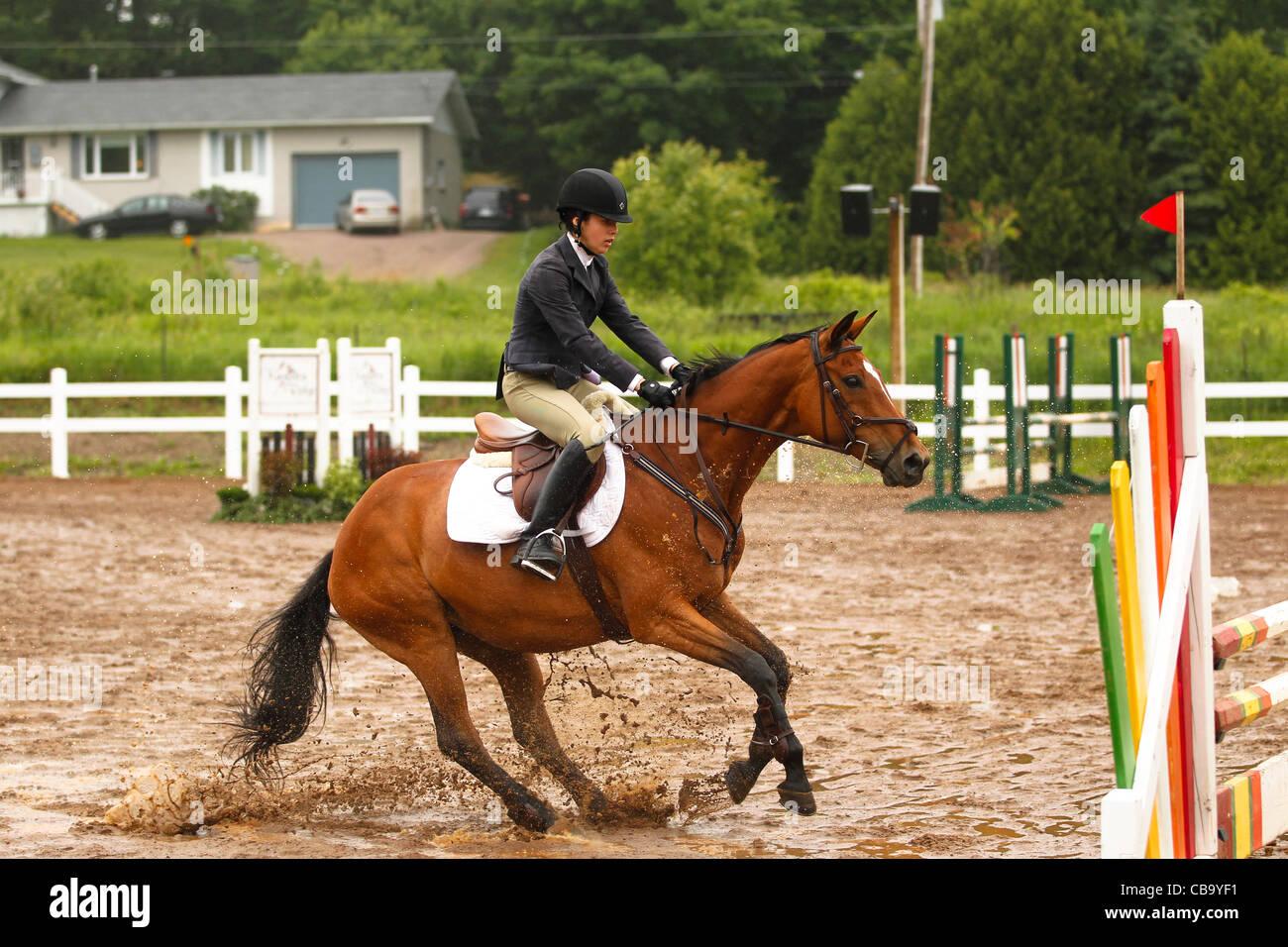 Bay horse jumping - Stock Image