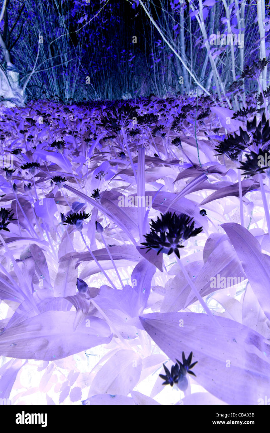 Closeup of flowers in forest negative - Stock Image