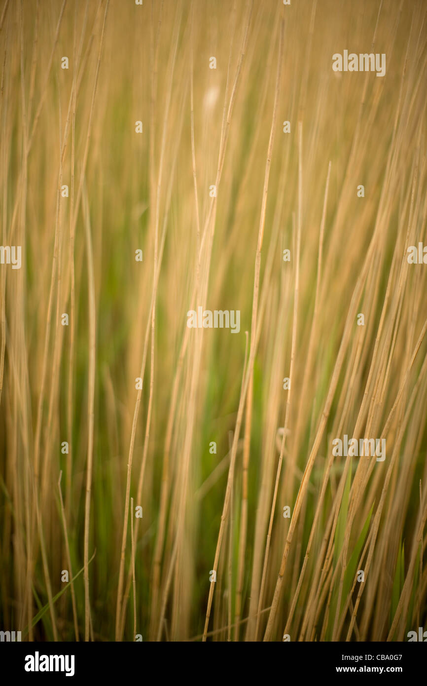 Grass Stems - Stock Image