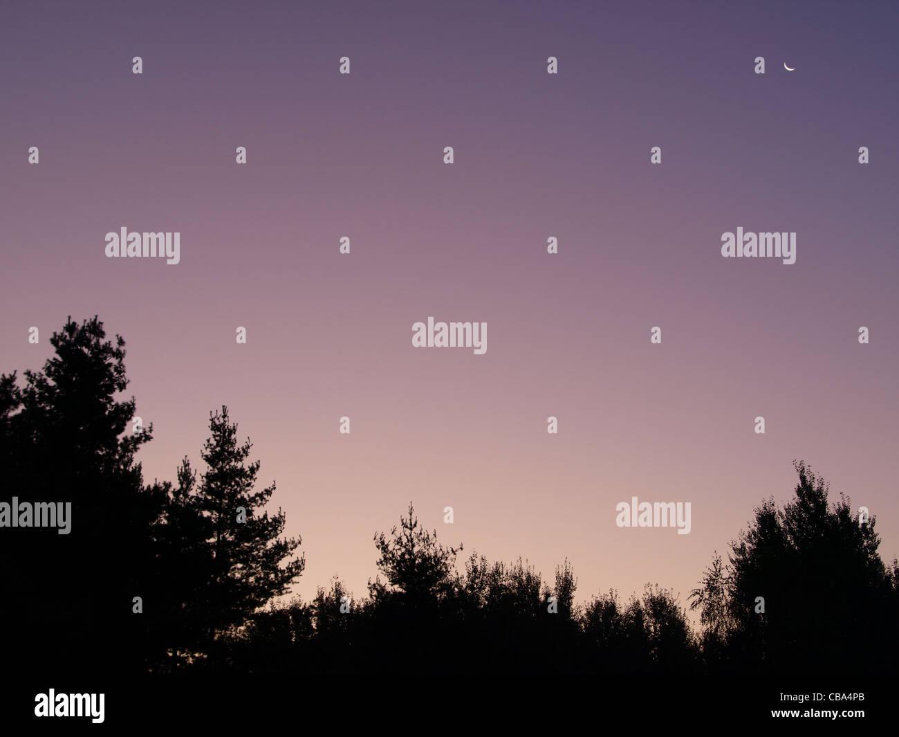 sunrise with little moon over trees / Sonnenaufgang mit kleinem Mond über Bäumen - Stock Image