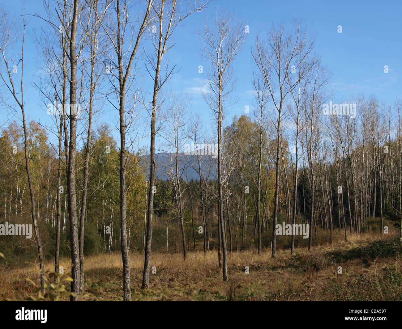 highmoor, hill moor, continental raised bag / Arracher Hochmoor with the mountain Osser / Bavarian Forest, Bavaria, Stock Photo