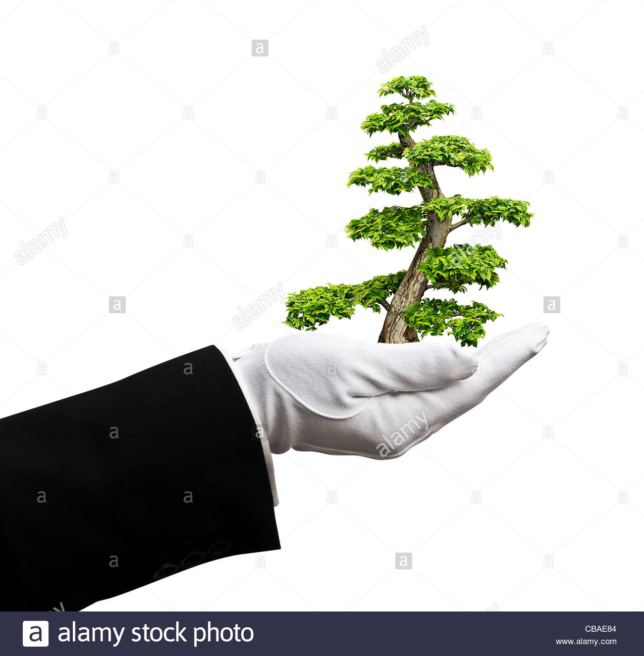 tree in hand - Stock Image