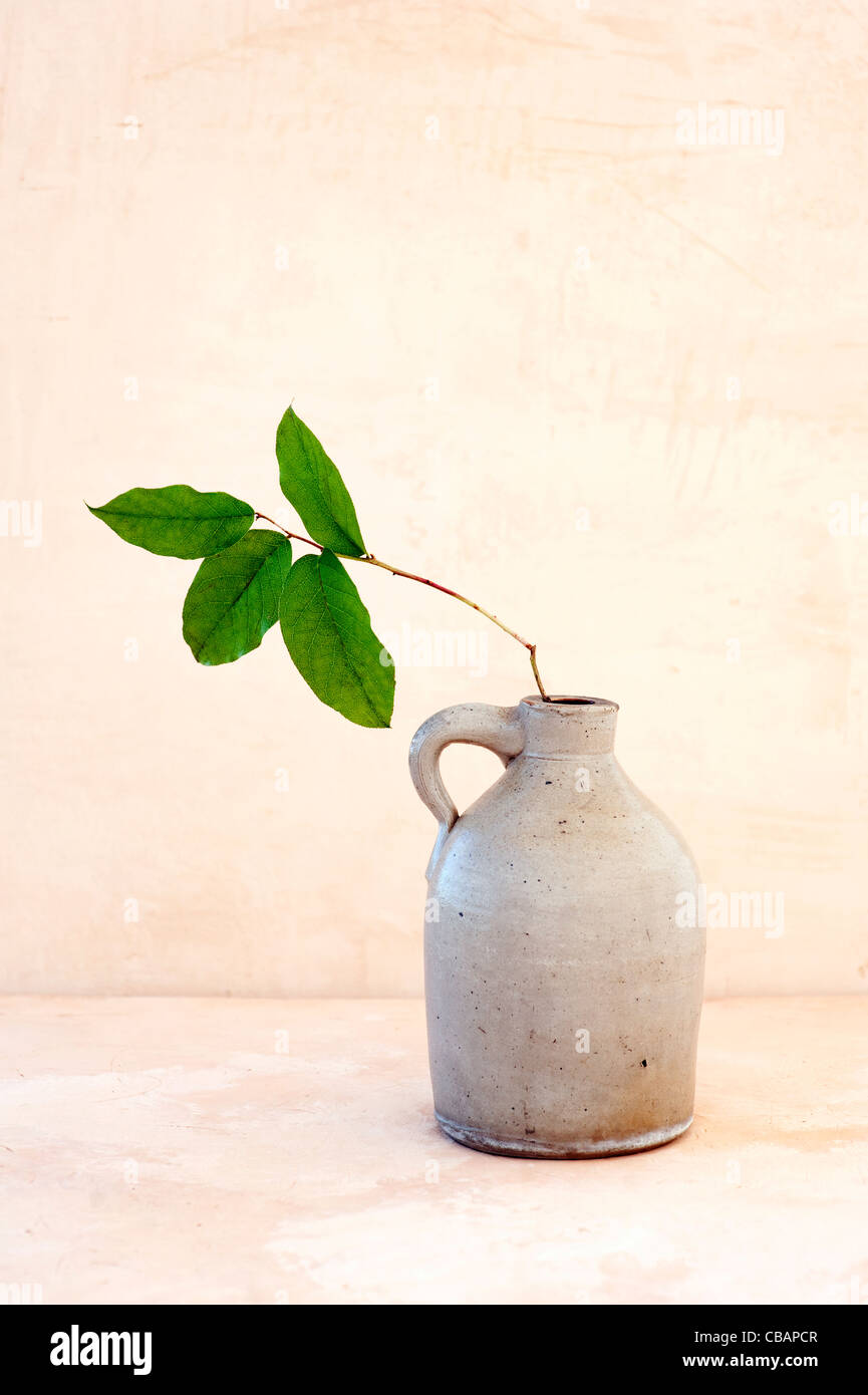 Old traditional jug with a branch of green leaves. - Stock Image