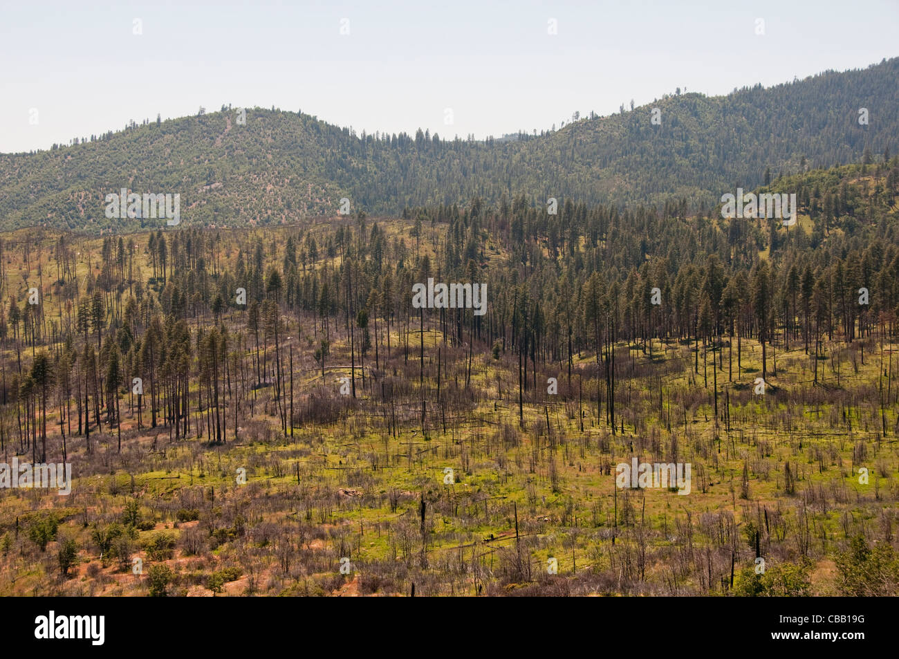Forest fire at Big Oak Flat, Yosemite National Park, California, USA. Photo copyright Lee Foster. Photo # california120705 - Stock Image