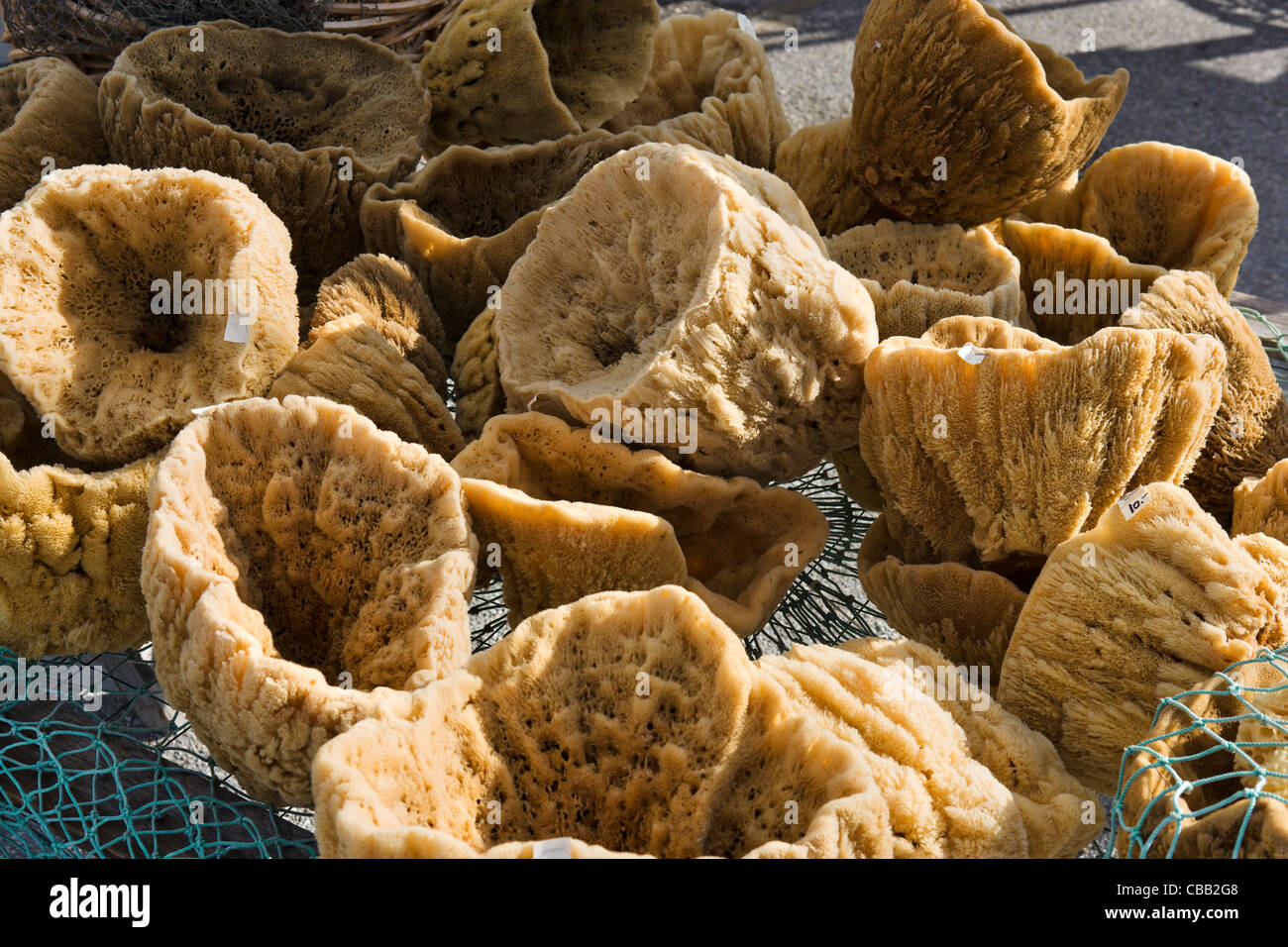 Natural sponges for sale on the Sponge Docks, Tarpon Springs, Gulf Coast, Florida, USA - Stock Image