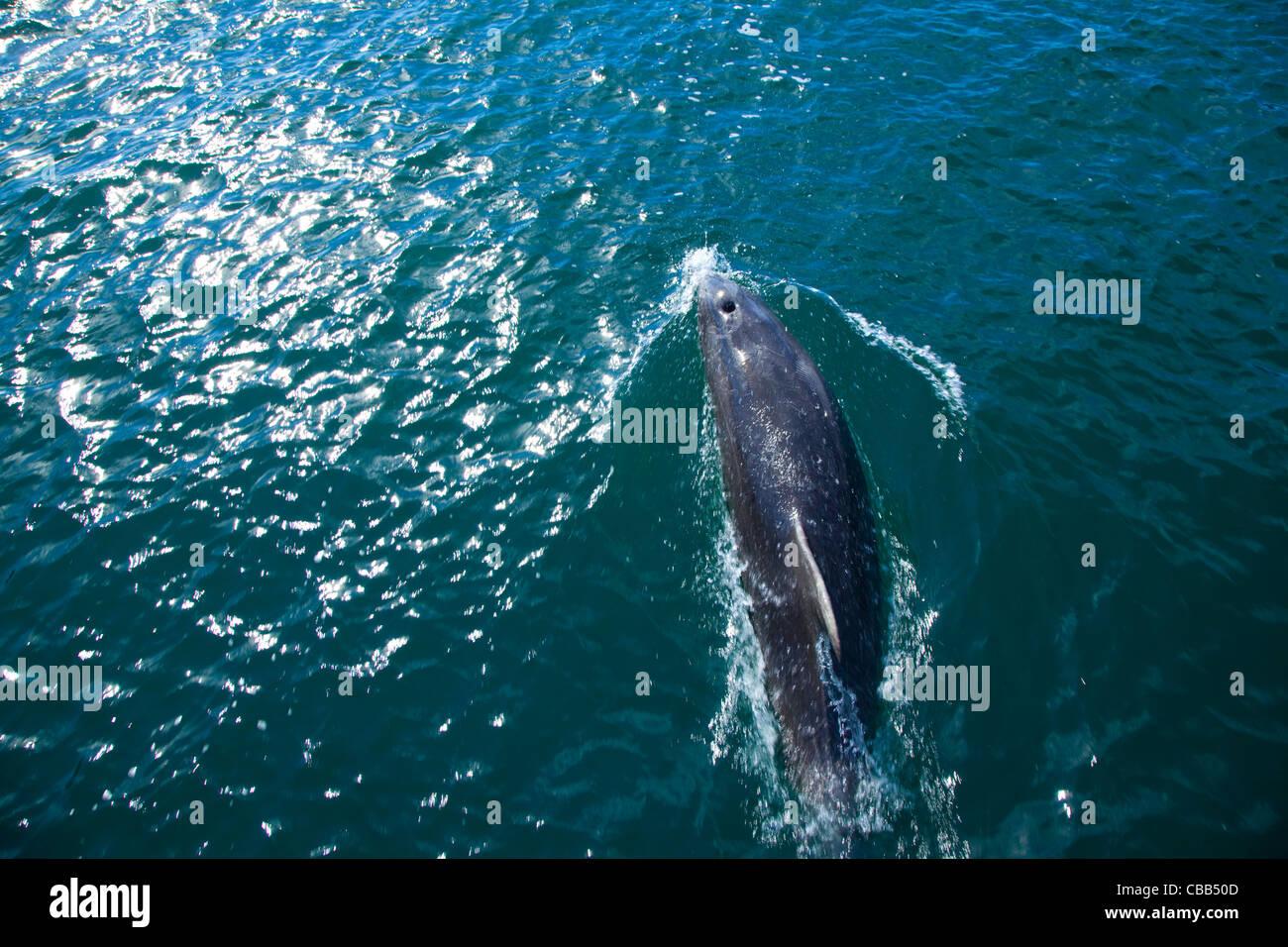 Dolfin Watch Ecotour, Marlborough Sound, South Island, New Zealand - Stock Image