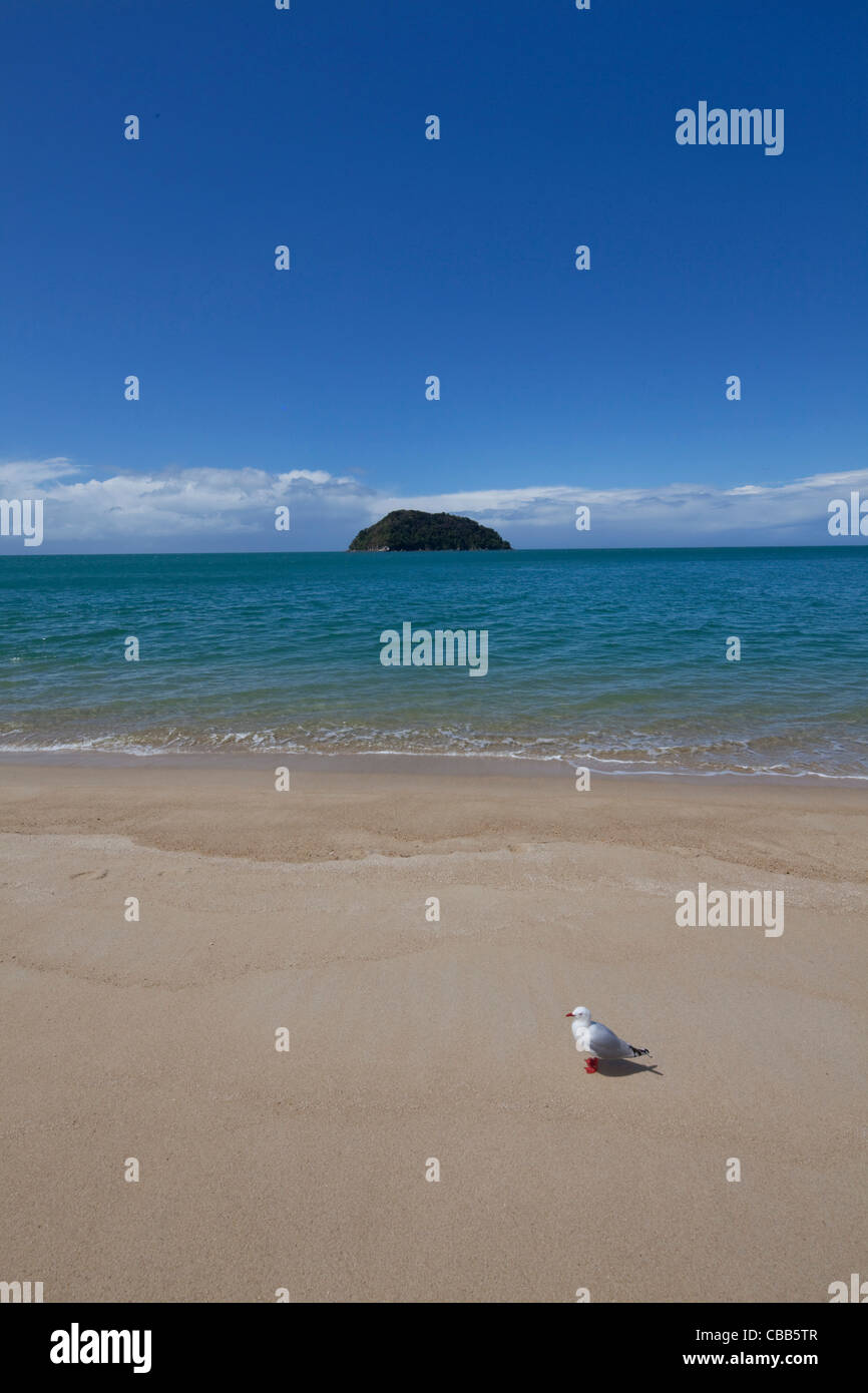 Tonga Quarry Beach, Kaiteriteri Coast, Abel Tasman National Park, South Island, New Zealand - Stock Image
