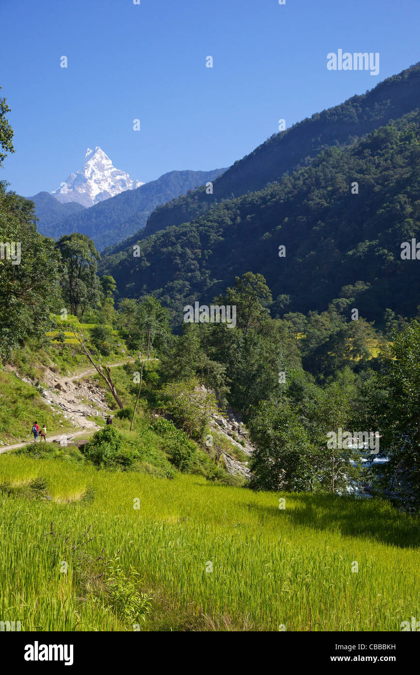 Trek from Ghandruk to Nayapul, views of Machhapuchhare, Fish Tail, Annapurna Sanctuary Region, Nepal, Asia - Stock Image
