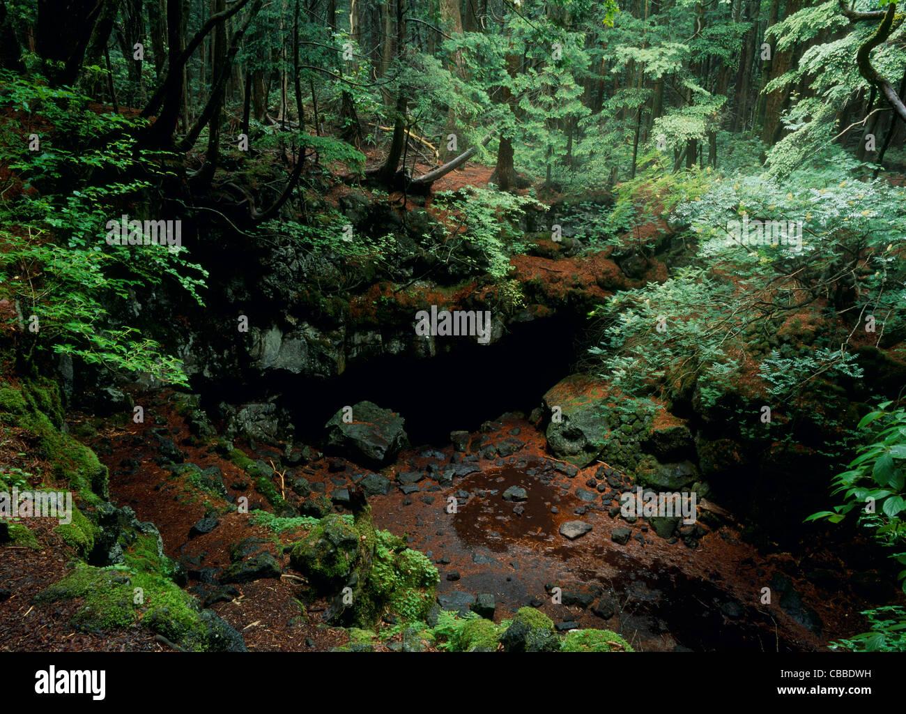 Fuji Wind Cave of Fuji Primeval Forest, Fujikawaguchiko, Yamanashi, Japan - Stock Image