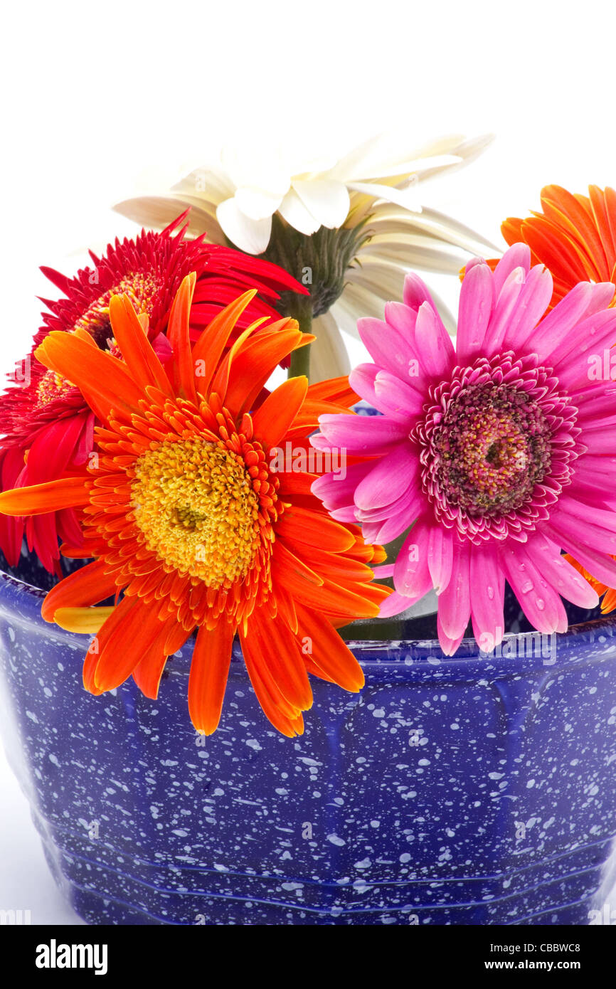 Multicolored flowers in a blue bowl Stock Photo: 41443368 - Alamy