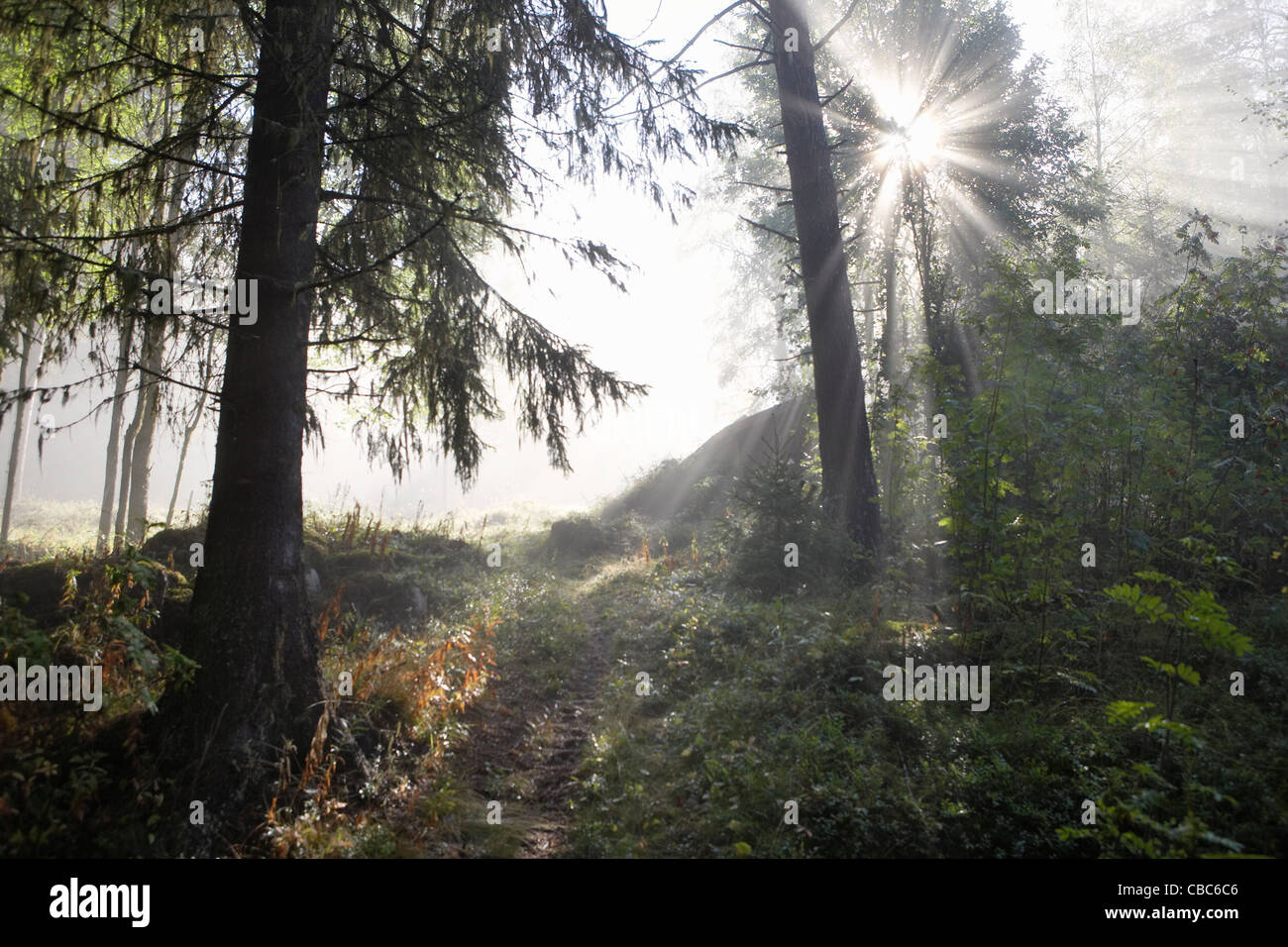 Sunlight shining through forest - Stock Image