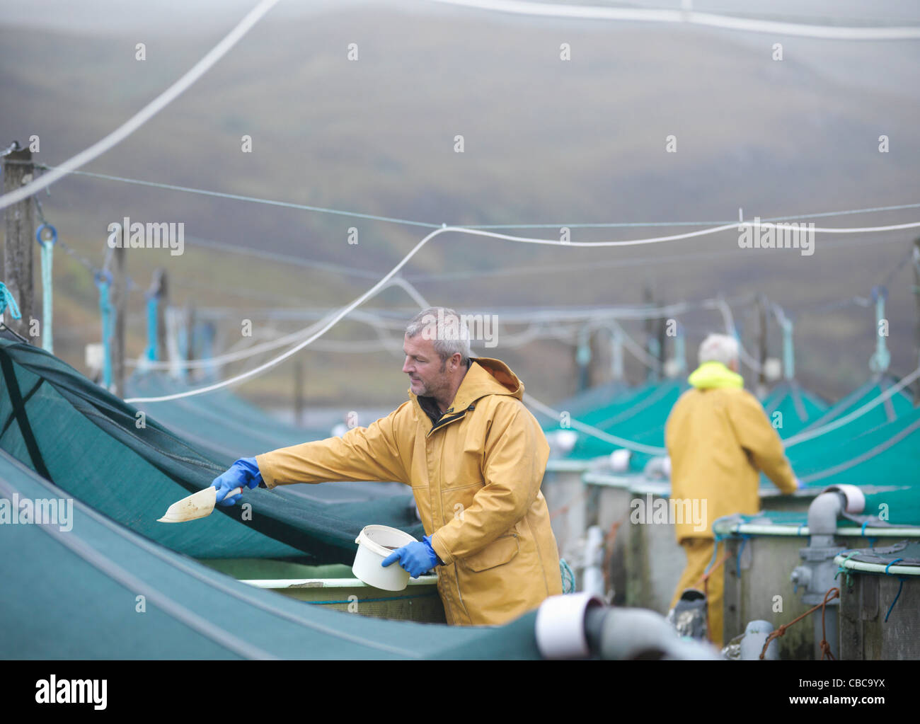 Workers feeding fish in farm - Stock Image