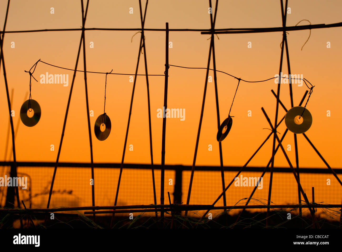 Orange sunset silhouette, bird scarer, four music CD's, blowing in the wind, hanging from bamboo garden canes - Stock Image