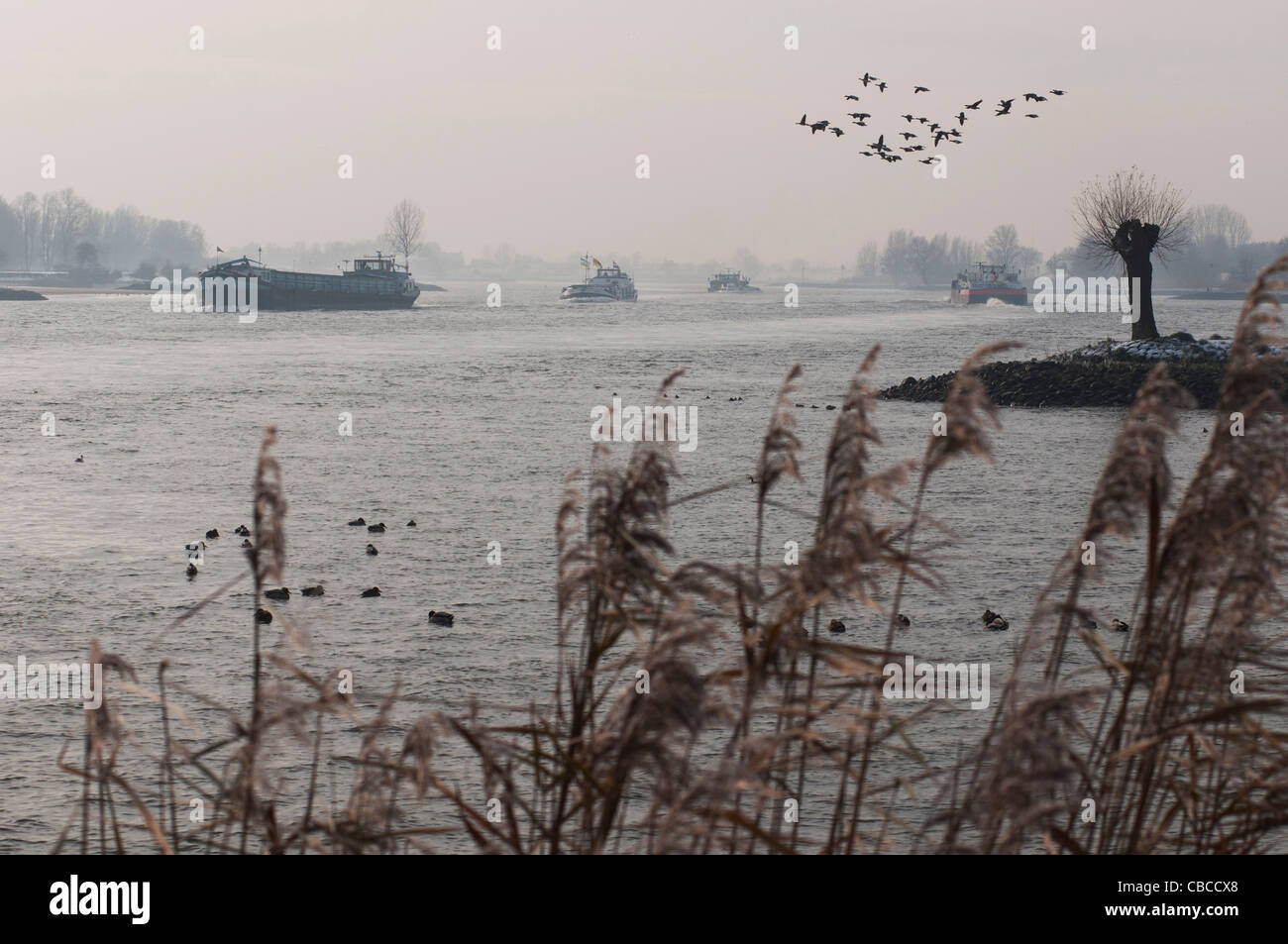 misty view at the river Lek / Rhine - Stock Image