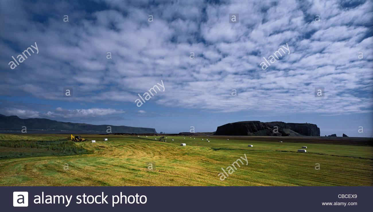Hayfield being harvested under blue sky - Stock Image