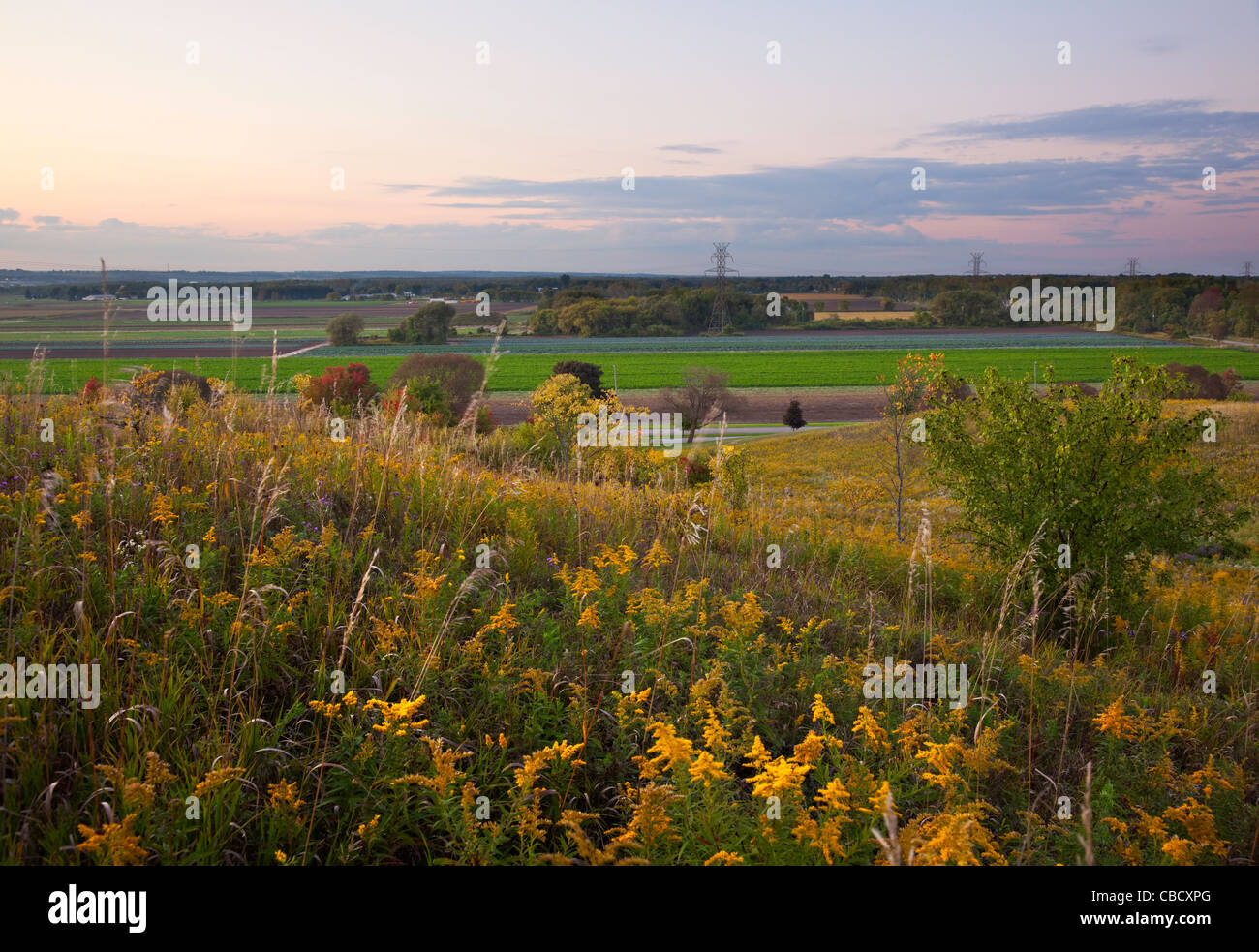 Sunset over a section of the Holland Marsh. Bradford West Gwillimbury, Ontario, Canada. - Stock Image