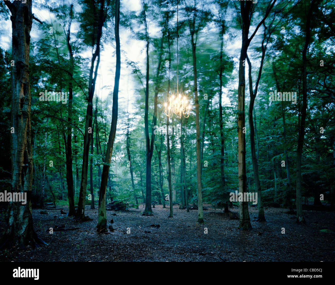 Lights hanging from tree in forest - Stock Image