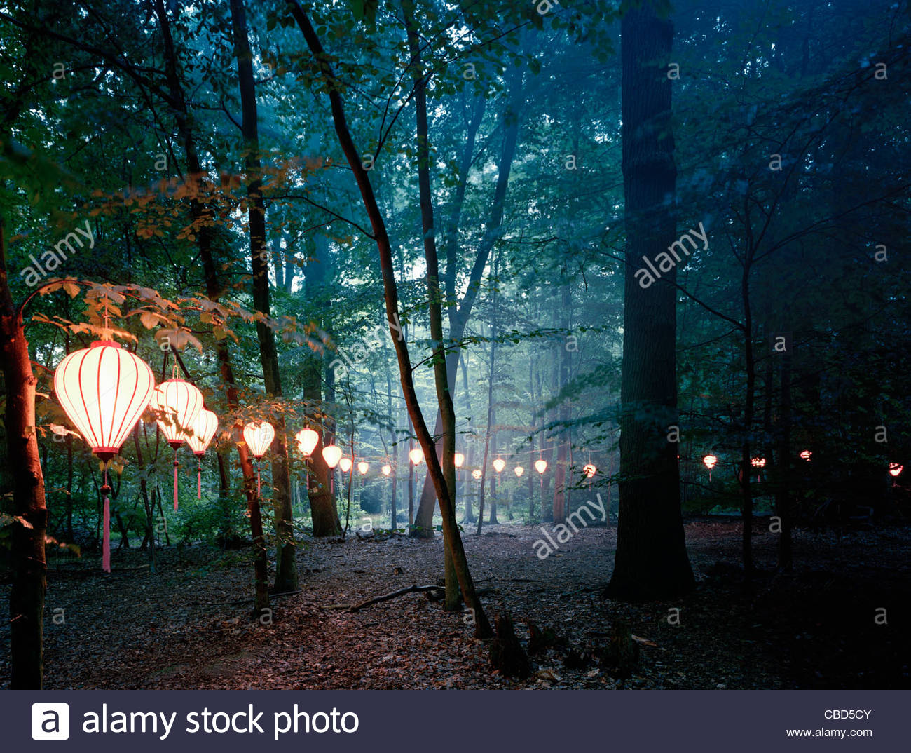 Lights hanging from trees in forest Stock Photo: 41471611 ...