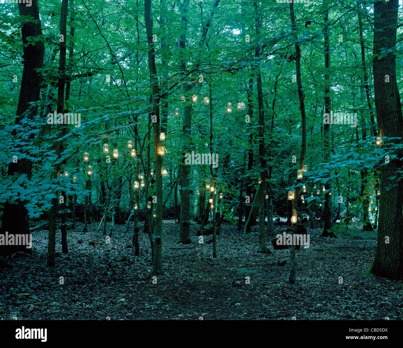 Lights hanging from trees in forest Stock Photo