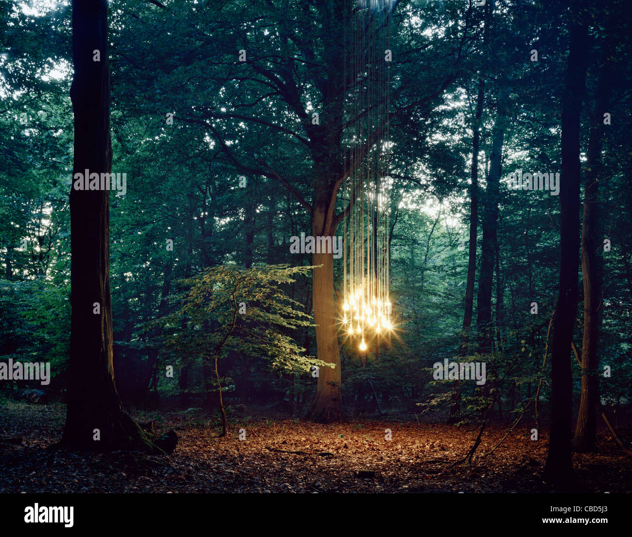 Lights hanging from tree in forest Stock Photo