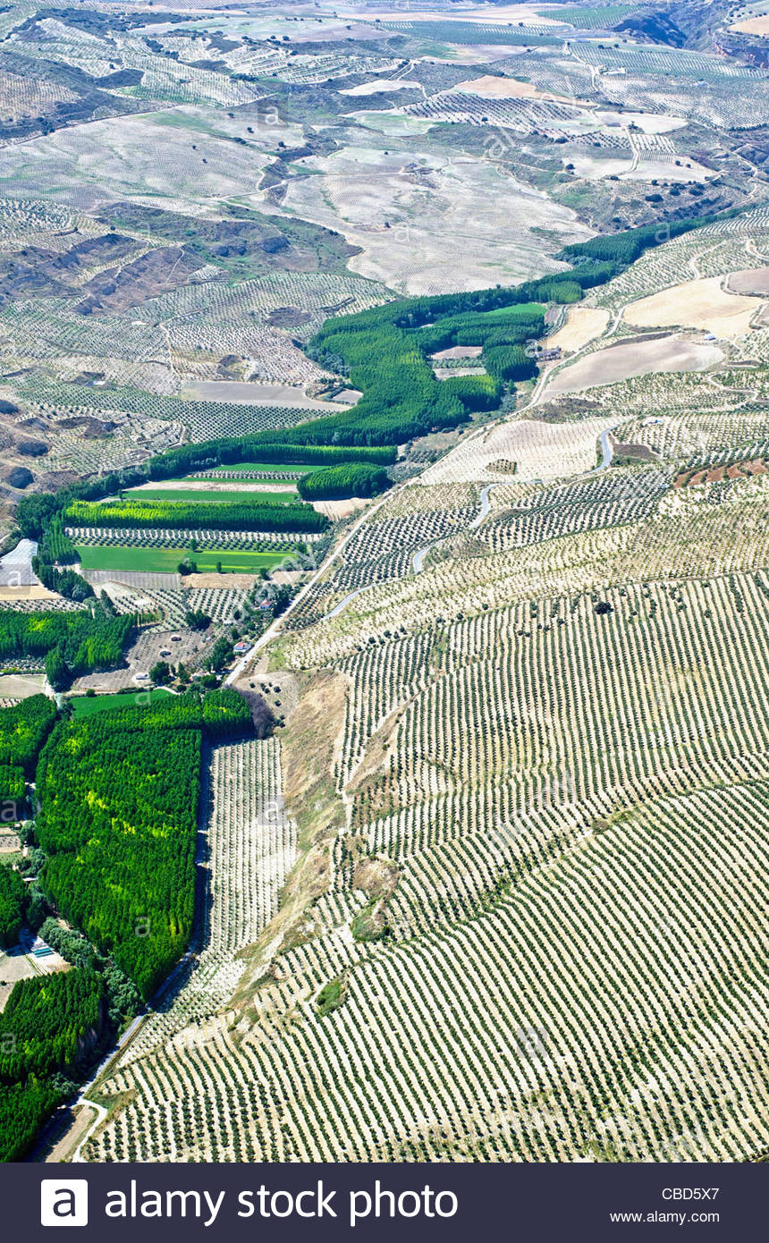 Aerial view of poplar tree plantation - Stock Image