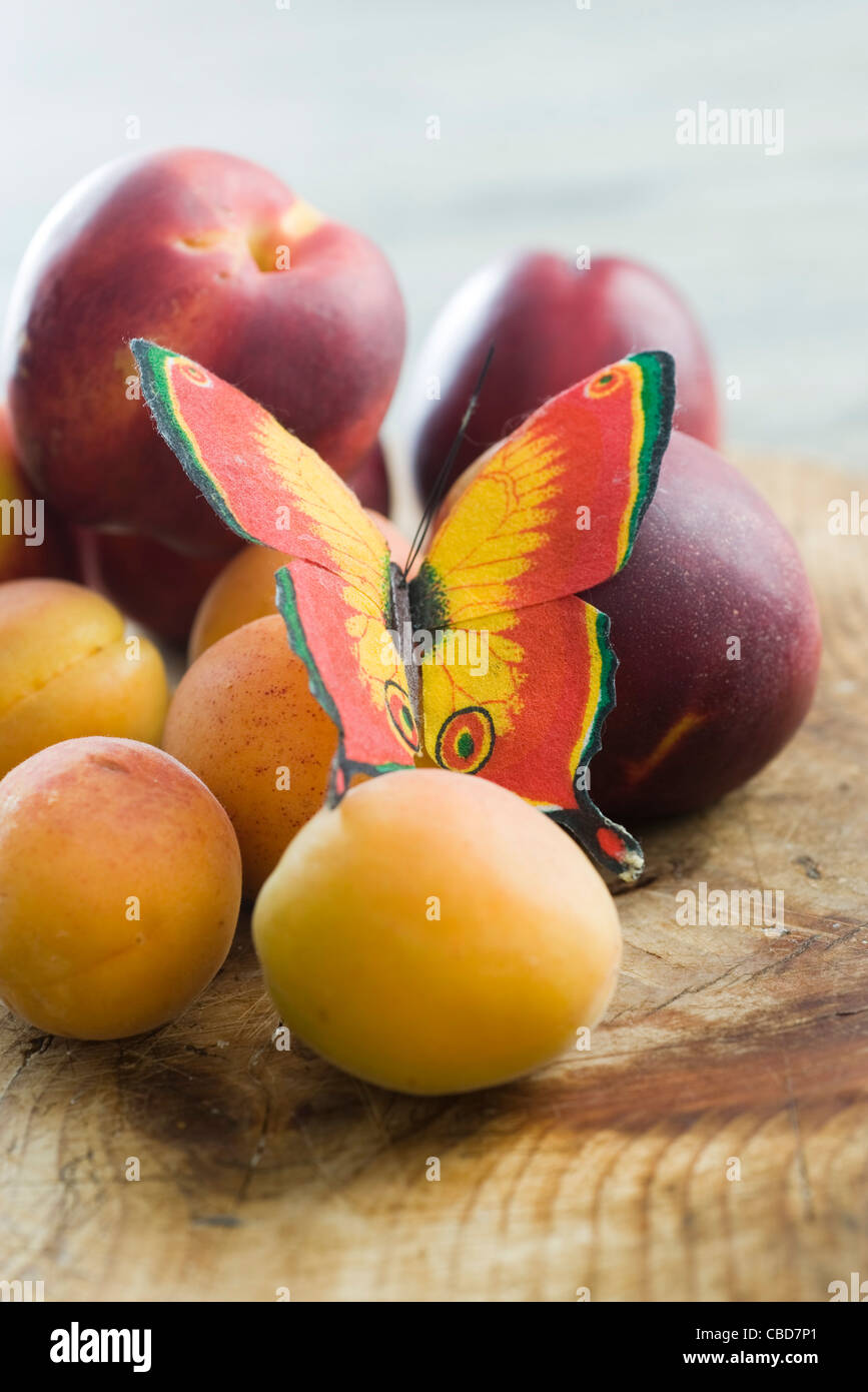 Fake butterfly on fresh plums and apricots - Stock Image