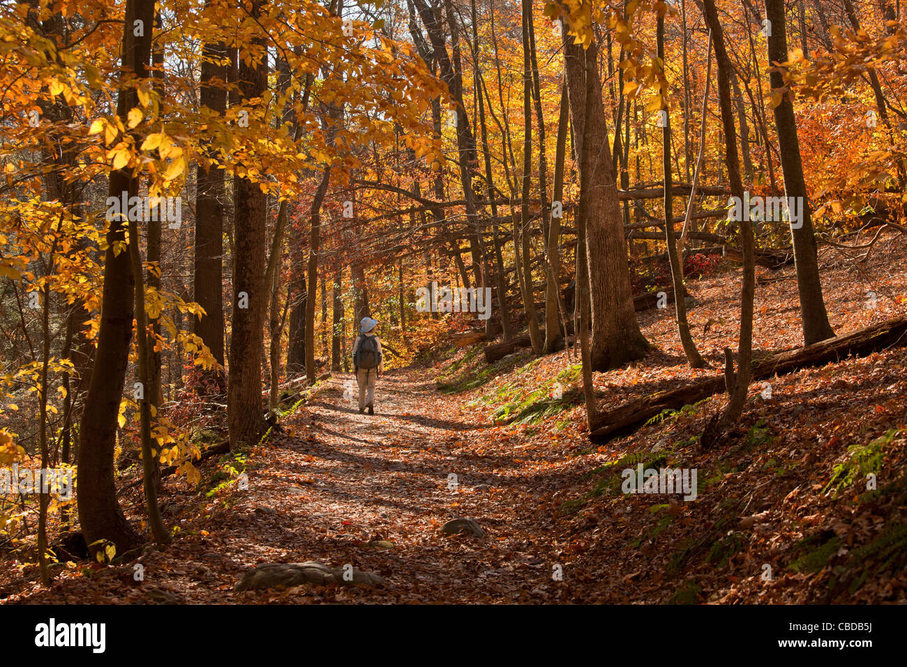 Walker on The Appalachian Trail (AT) in autumn at Delaware Gap, New Jersey, USA - Stock Image