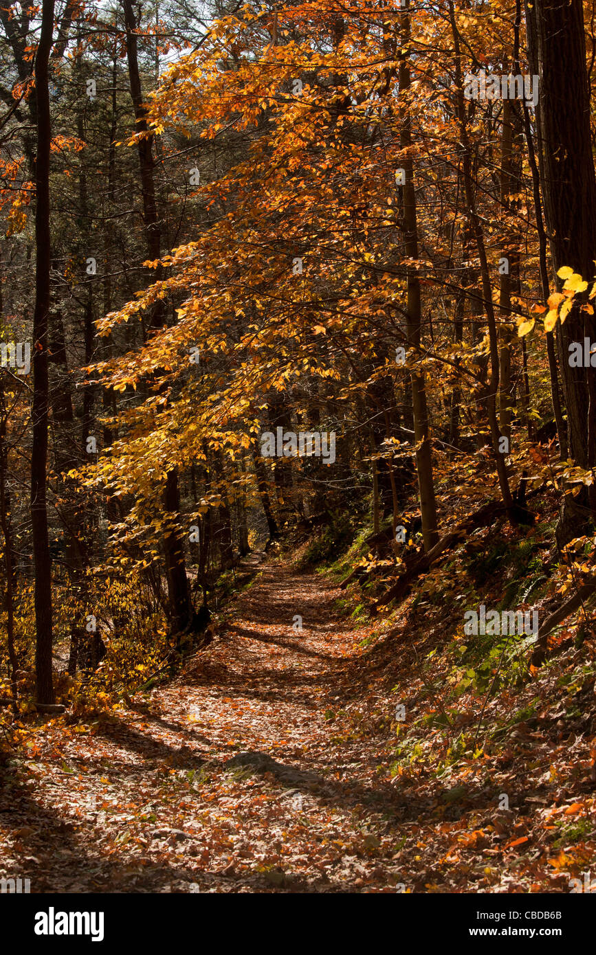 The Appalachian Trail (AT) in autumn on the Kittatinny Ridge, at Delaware Gap, New Jersey, USA - Stock Image