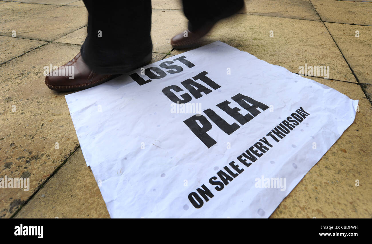 LOCAL NEWSPAPER BILLBOARD POSTER WITH 'LOST CAT PLEA' HEADLINE RE  LOCAL NEWSPAPERS WEEKLIES DECLINING NEWSPAPER - Stock Image