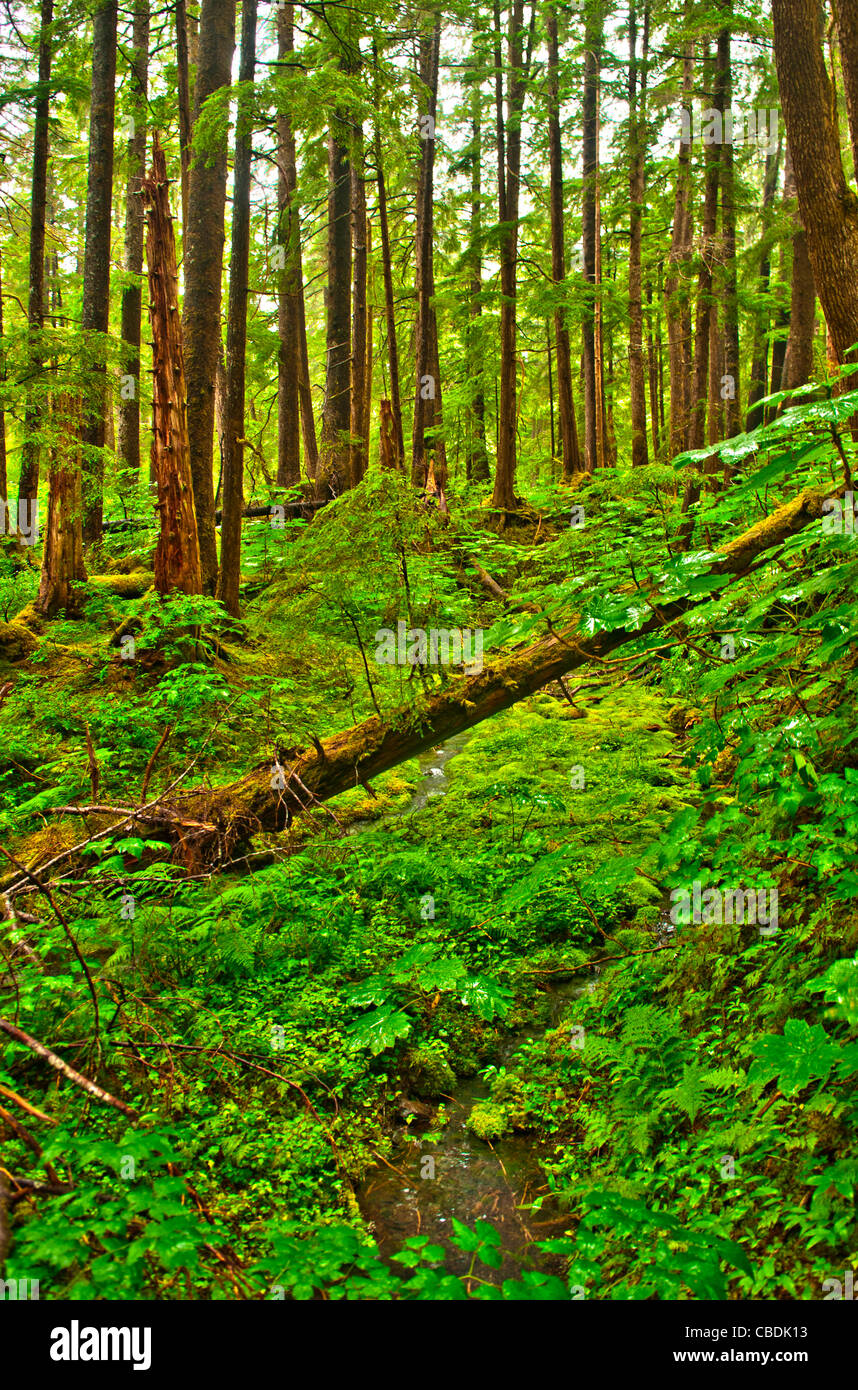 Temperate rainforest, Tongass National Forest, Sitka, Alaska - Stock Image