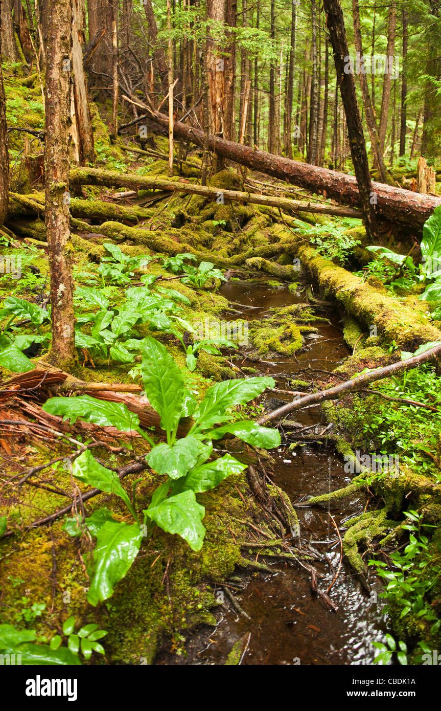 Tongass National Forest, Sitka, Alaska - Stock Image