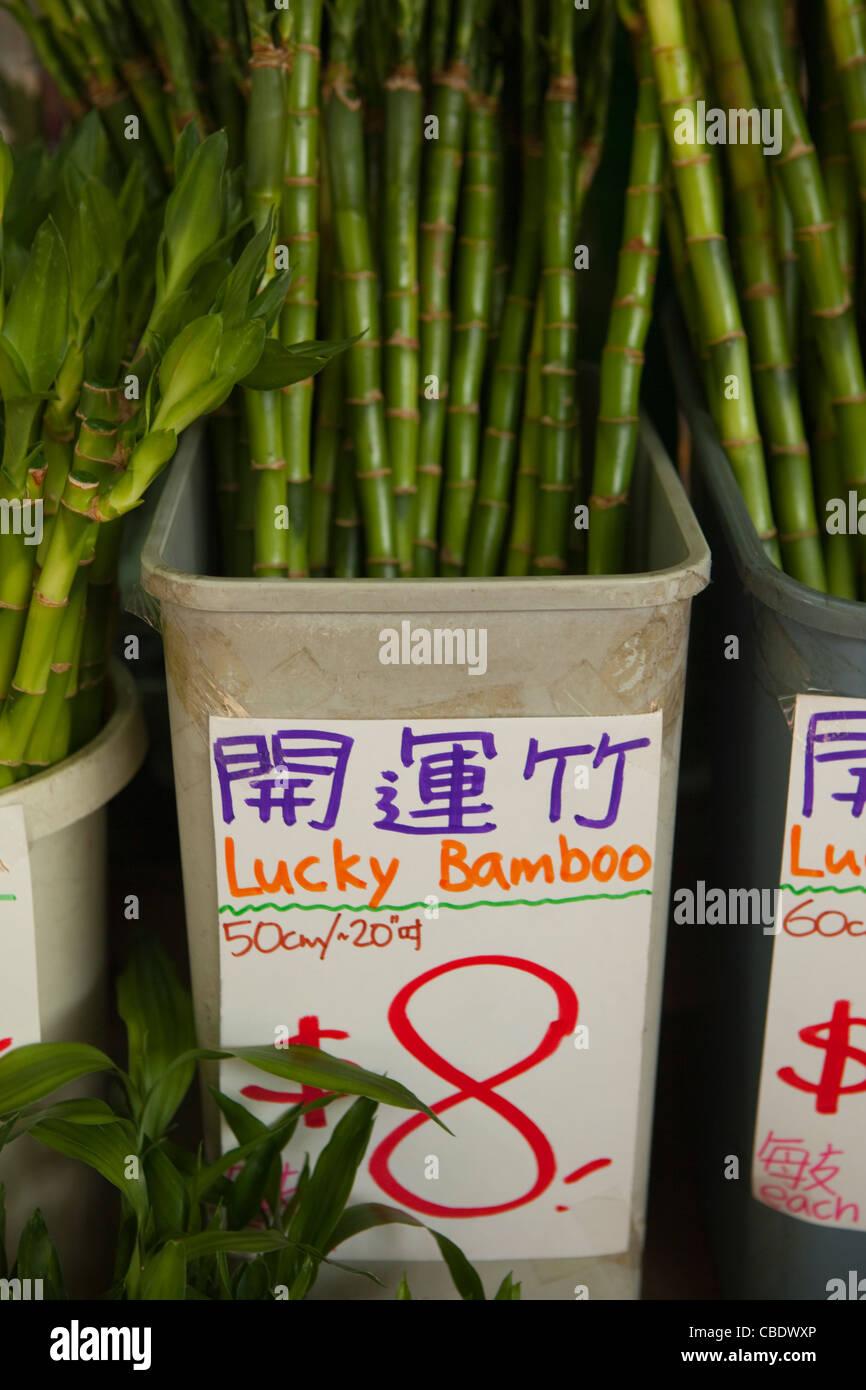 Lucky bamboo for sale, Hong Kong, China - Stock Image
