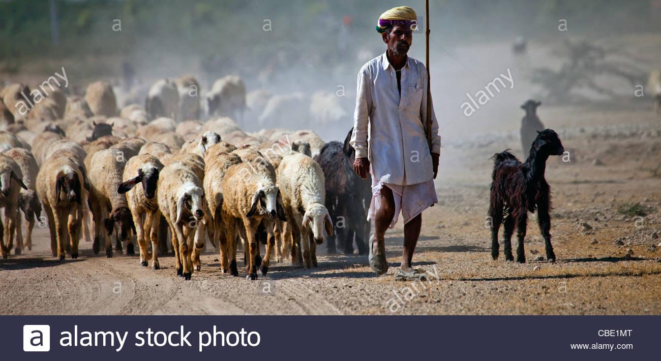 Shepherds in a village near Jodhpur, Rajasthan, India - Stock Image