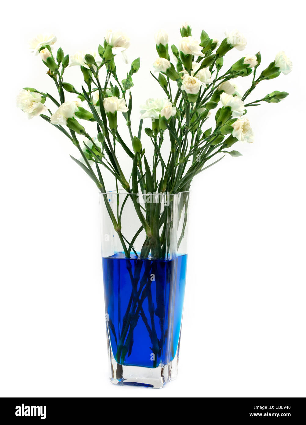 Classic Chemistry Experiment Dying White Carnations With Food Coloring