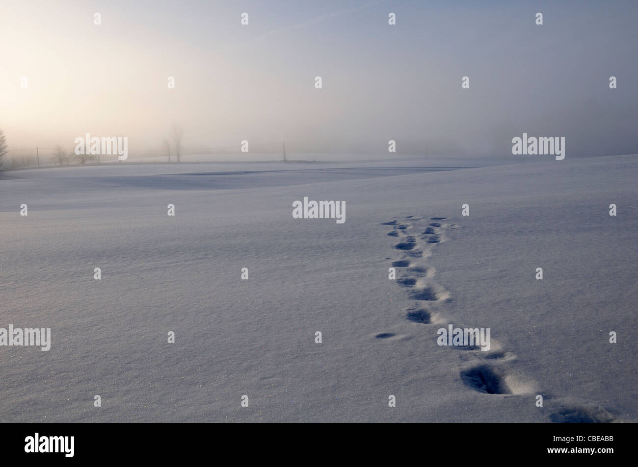 Footprints or animal tracks across a snowy field - Stock Image