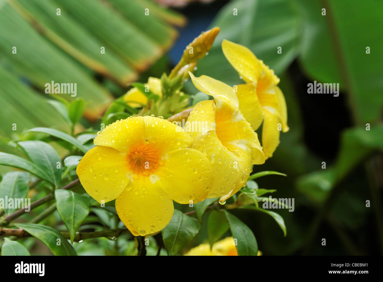 Indian Monsoon Flowers Stock Photos Indian Monsoon Flowers Stock