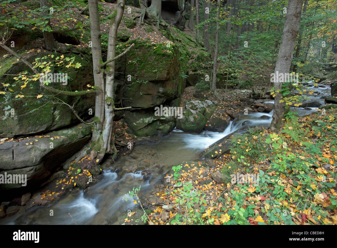 The stream Dorfbach in the Kirnitzsch Valley. Elbe Sandstone Mountains, Saxony, Germany. - Stock Image