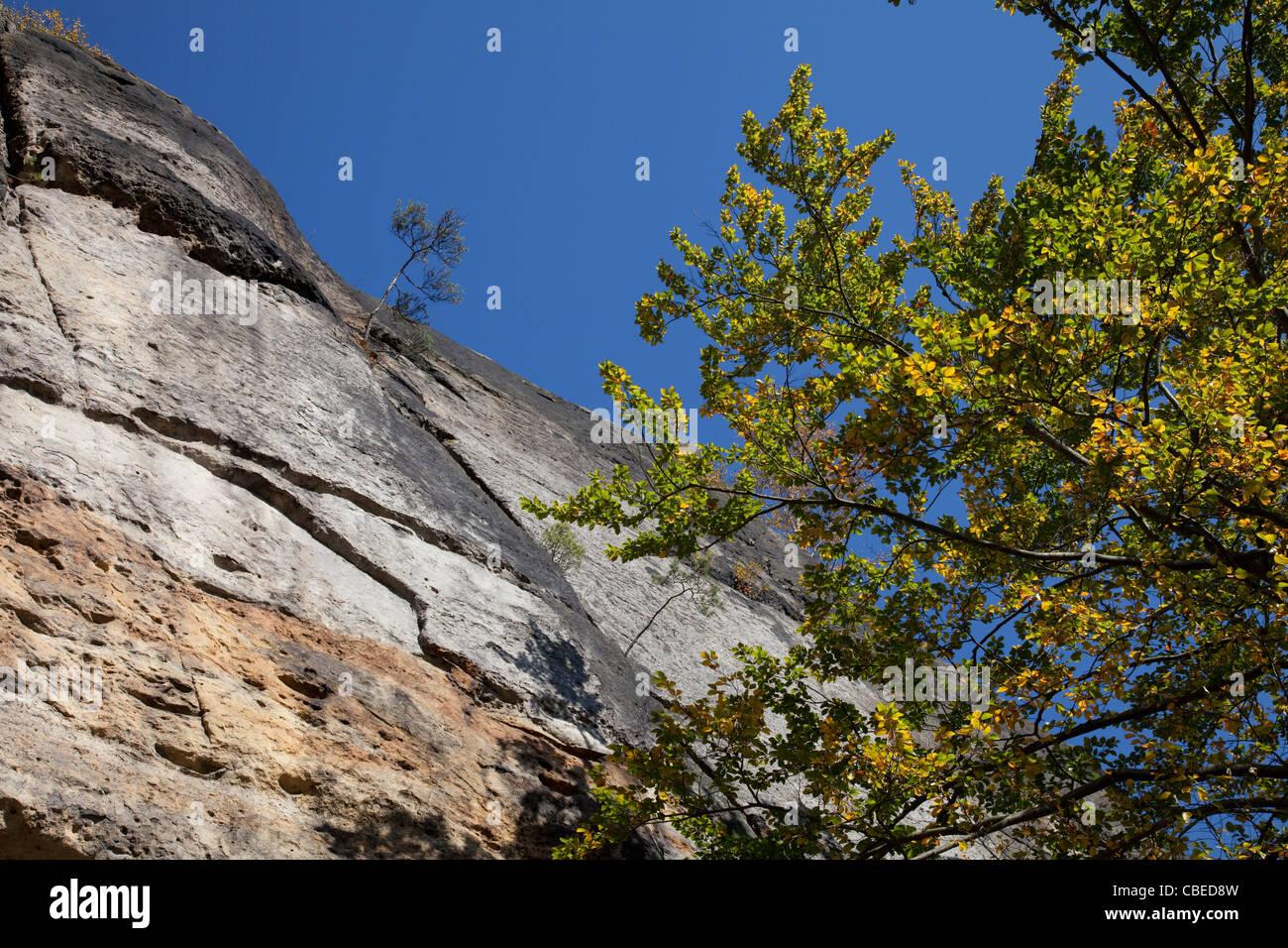 Sandstone rocks at the Kirnitzsch Valley. Elbe Sandstone Mountains, Saxony, Germany. - Stock Image