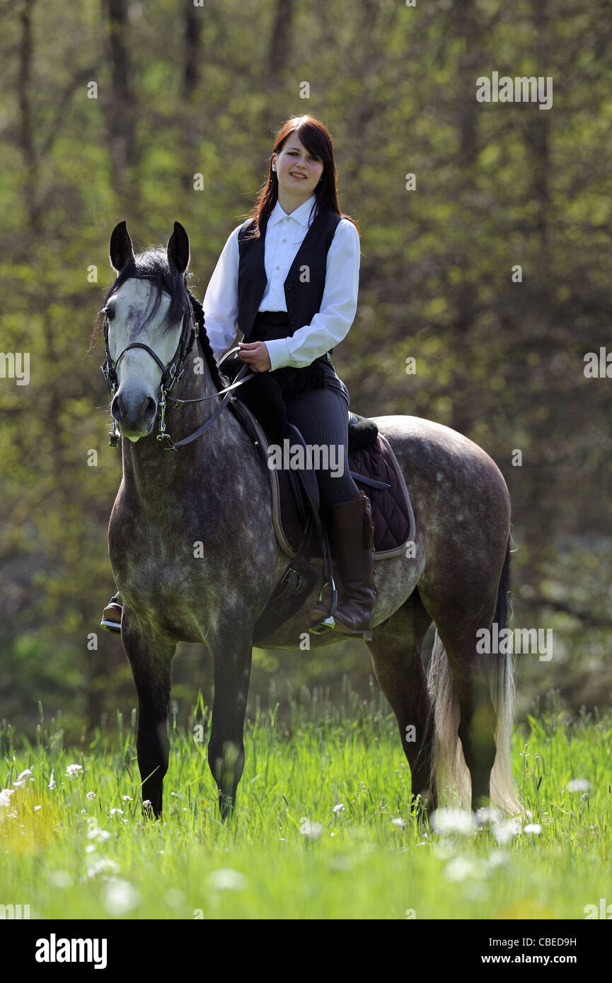 Lusitano (Equus ferus caballus) with rider, standing on a meadow. Stock Photo