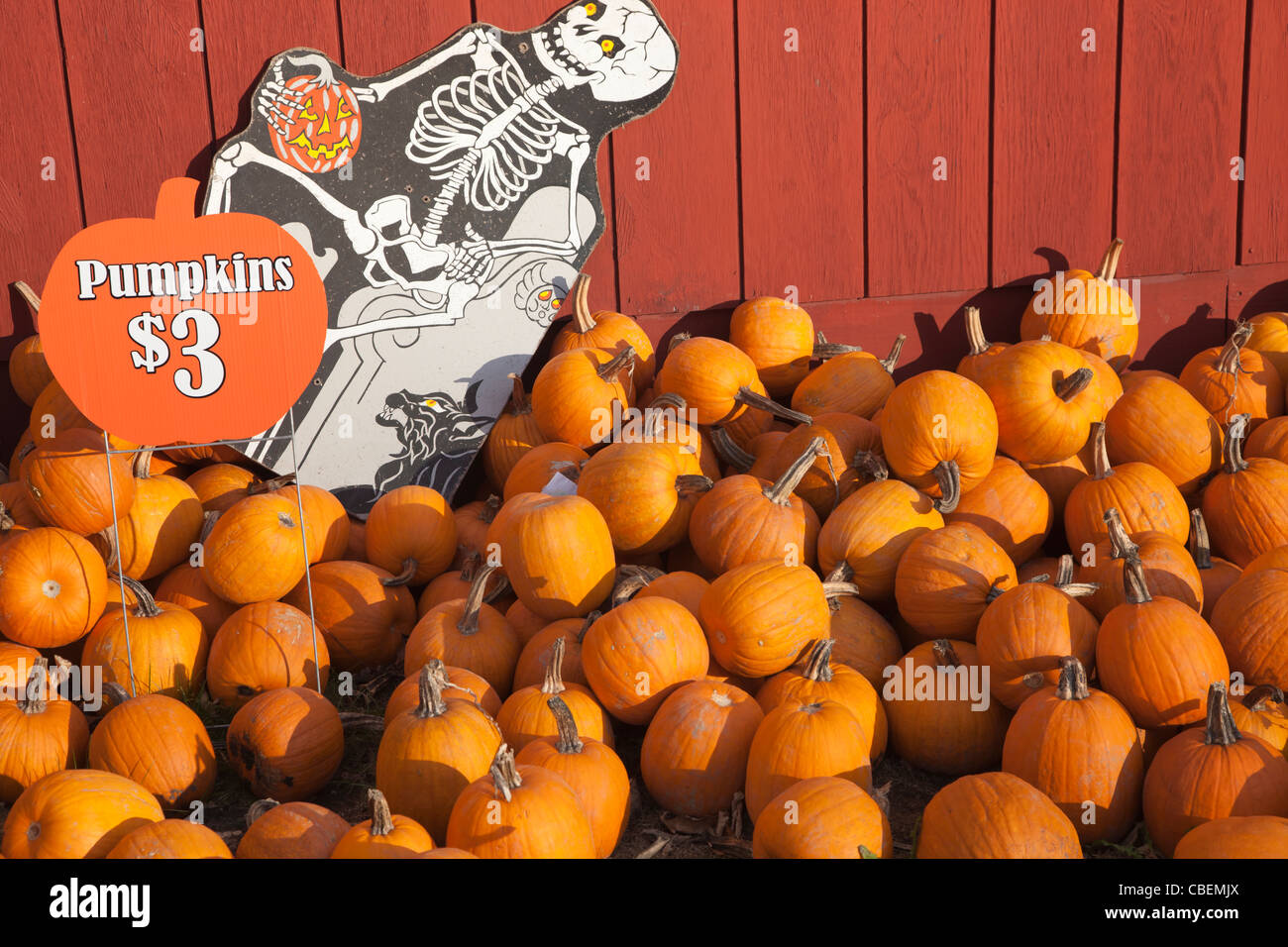 Pumpkins for sale at a farm in autumn. - Stock Image